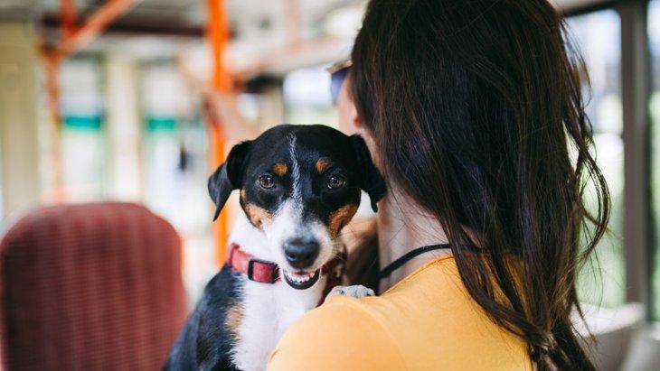 犬と一緒にバスに乗るときのマナーと注意点