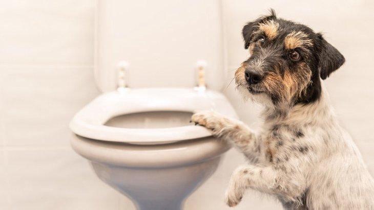 犬がトイレの前で飼い主を待っている時の心理4つ