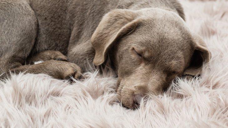 愛犬が亡くなったら。自宅でやるべきことから葬儀の種類まで