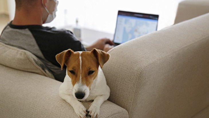 犬のテンションが低い時にするべきではない『NG行為』3選