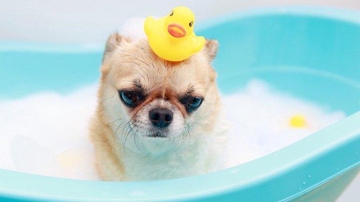 犬に絶対してはいけない『間違ったシャンプーの仕方』6選