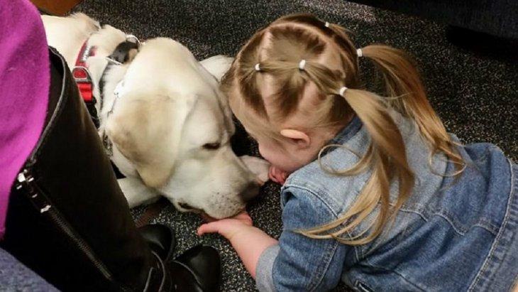 少女と糖尿病アラート犬の絆が生んだ奇跡(まとめ)