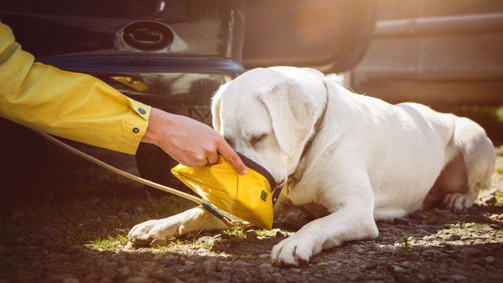 災害時、愛犬の飲み水はどうすればいい?