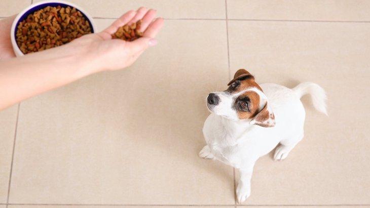 犬の早食い防止策は食器だけじゃない!早食いするリスクや対策法、おすすめグッズまでをご紹介
