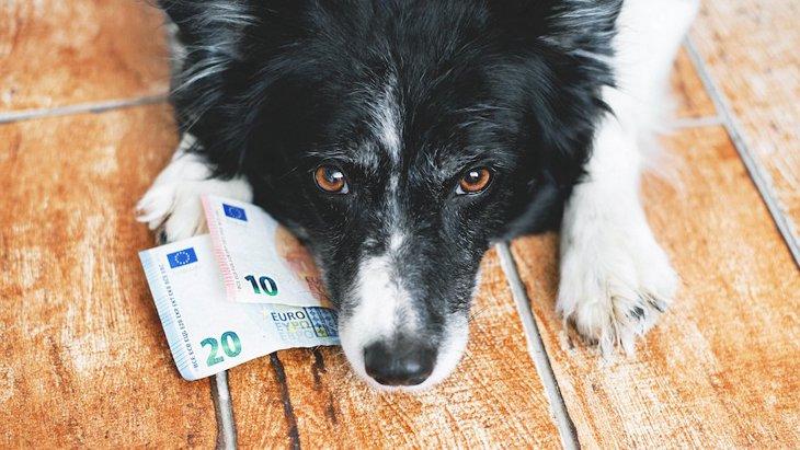 飼う前に知っておきたい!犬との暮らしで『お金がかかること』4選