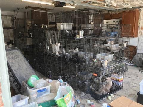 異臭がするとの通報で民家から100匹以上の犬猫の多頭飼育が発覚!