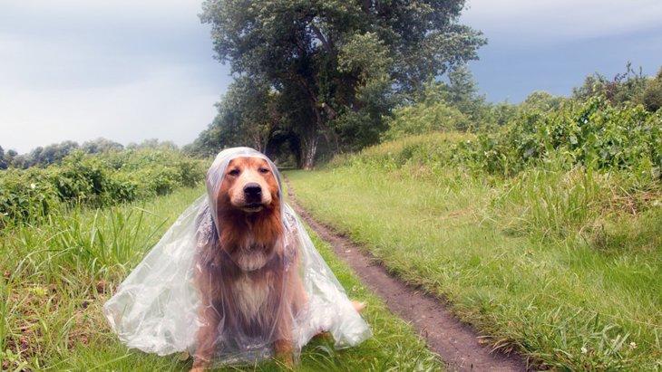 犬が台風を怖がる心理とやりたい対策