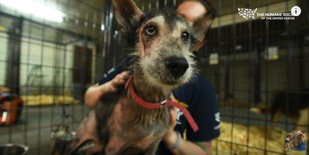 裁判に発展した多数の犬の虐待。楽しい施設を作るはずがどこで間違えた?