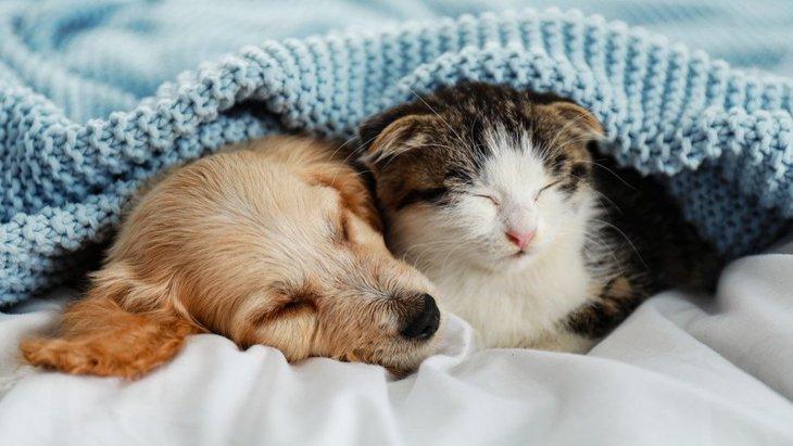 犬と猫を一緒に飼っていると起きるかもしれない事故5選