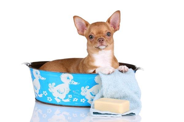 犬用バスタブおすすめ6選!人気のお風呂と選び方について