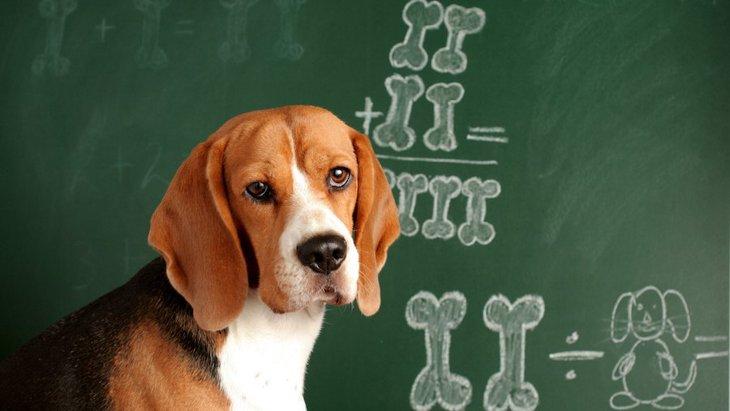 犬は動物の中でどのくらい高い知能を持ってるの?