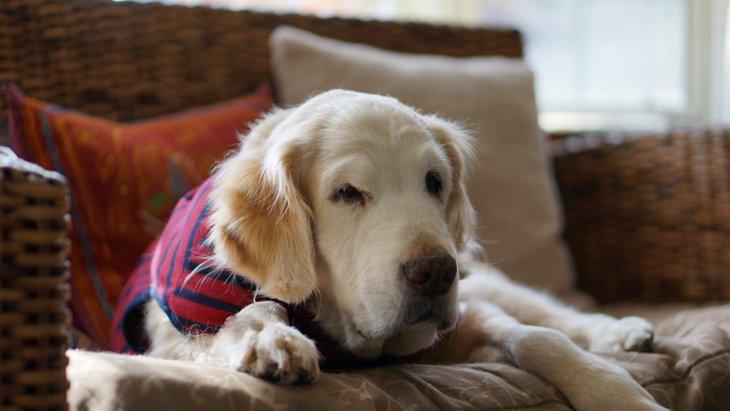 犬が老眼になっている時によくする行動4選!早めに気づいて最適な環境づくりを
