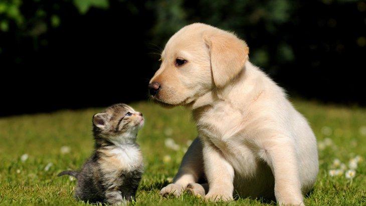 「犬」が「猫」の飼育数を下回る 調査開始から初めての結果に