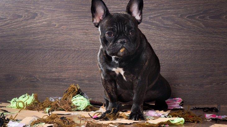 誤飲・誤食犬に問題行動をやめさせる4つの方法