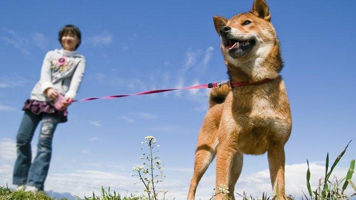 犬が飼い主を引っ張るように散歩する時の対処方法
