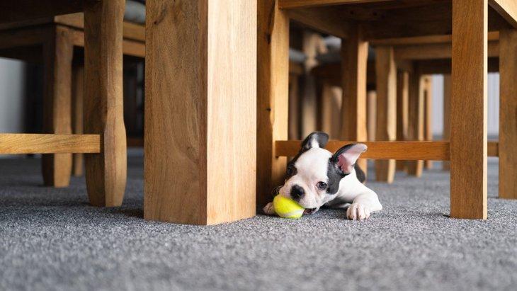 なぜ?犬が『テーブルの下にもぐる』時の心理7選