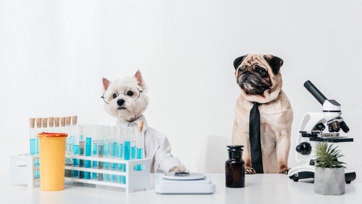 新型コロナウイルスの犬など動物への影響を調査する研究がスタート!