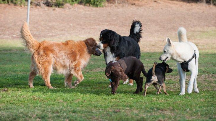 犬同士が身体の匂いを嗅ぎあっている時の心理3つ