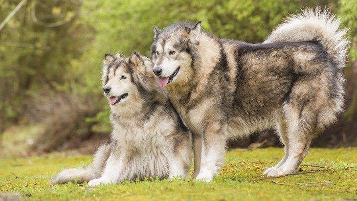 古代犬種5種の問題行動とその要因についての研究