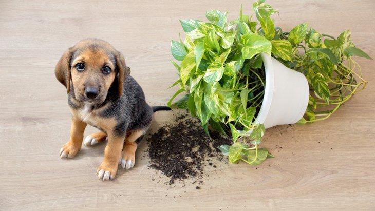 犬が家の中で大暴れしてしまう理由2選!やめさせるにはどうしたらいい?