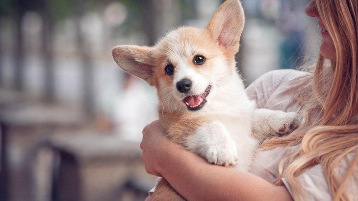 犬は飼い主に抱っこされてるとき何を考えてるの?