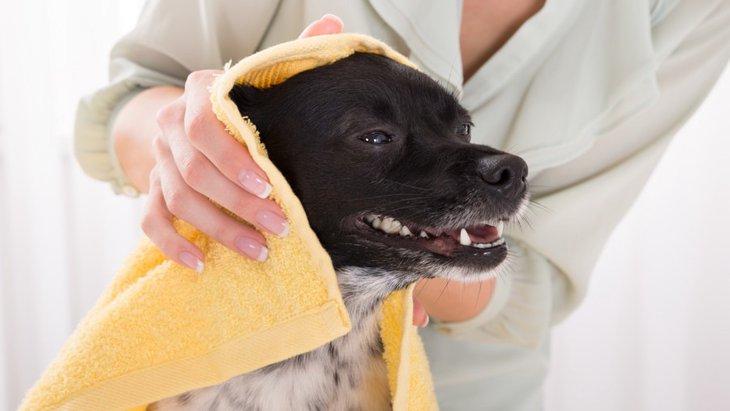 冬にする犬のシャンプーで気をつけるべき4つのこと