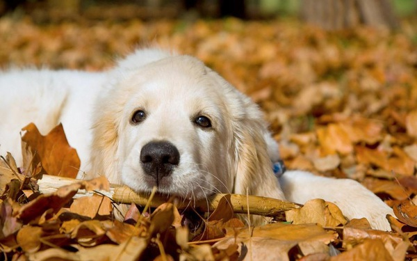 愛犬の体調不良 秋によくある症状を知っておこう