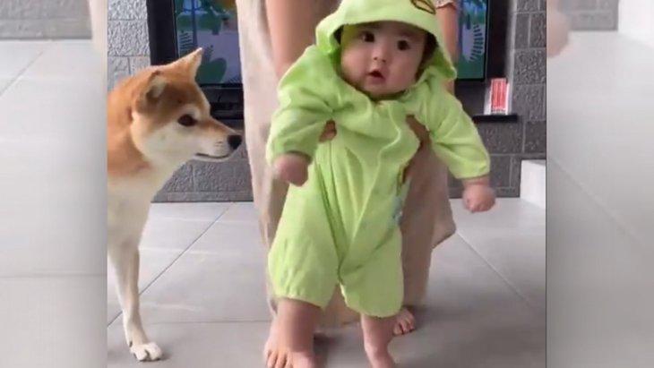 『気をつけて…!』赤ちゃんを見守る柴犬さんがSNSで話題に♡