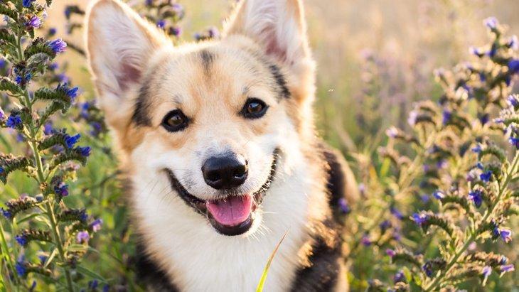 犬のために貯金をするか、ペット保険に入るか、どっちがいいの?