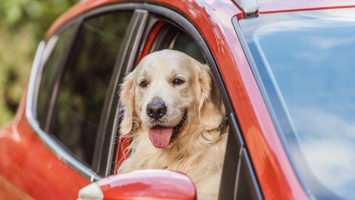 マンションで大型犬は飼える?確認すべき条件や注意するポイント