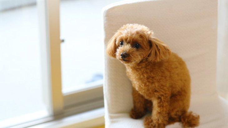 犬が音に敏感になってしまう原因