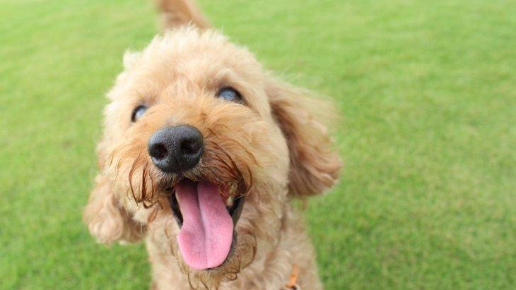犬がクルクル回って自分のしっぽを追いかける心理5つ