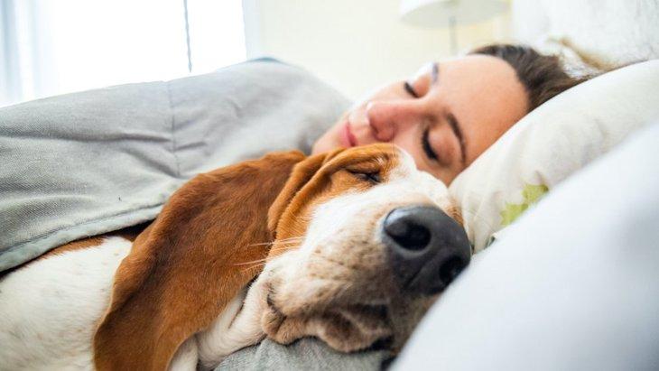 犬が飼い主と『一緒に寝たい時』に見せる仕草や行動4つ