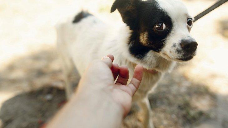 犬が怒ってしまう『飼い主の行動』4選!気付かずにこんな行為をしていませんか?