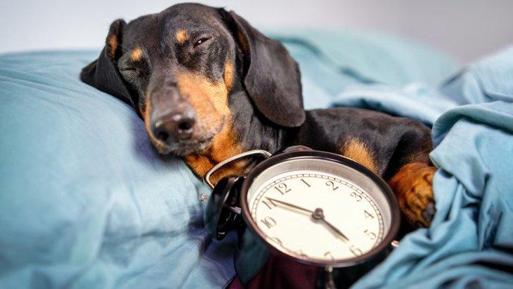 犬は『時間』を認識してるの?