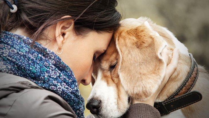 老犬介護の問題~1人で悩まずに相談をしよう~