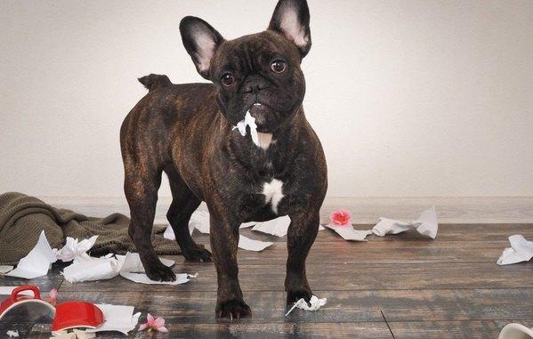 犬は不潔な家で飼っても大丈夫?