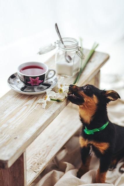 犬が中毒症状を起こしてしまった!日常に潜む危険