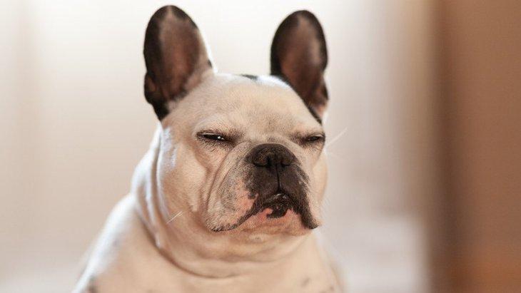『愛犬を叱れない飼い主』に起きるかもしれない3つの悲劇