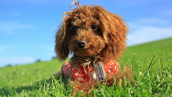 家族で飼いやすいと言われている犬種5選