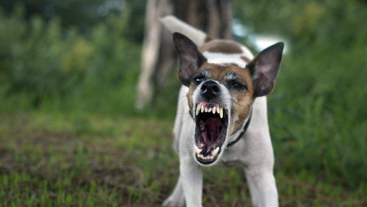 犬がすぐに『キレてしまう』原因と対処法4つ