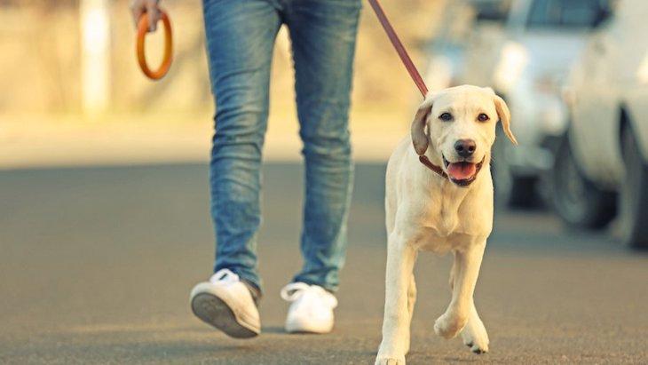 モラルの無い犬の飼い主がしているNG行為5つ