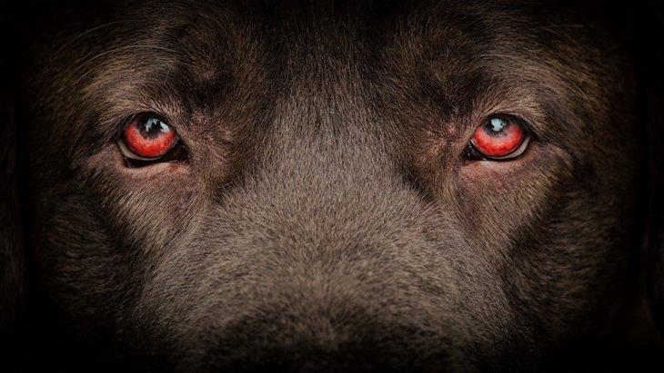犬の目が暗闇で光る理由