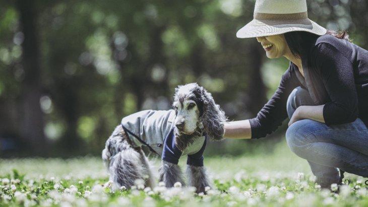 『長生きする犬』の特徴5選 寿命を延ばすために意識すべきこととは?
