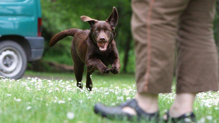 犬の名付けで対立した時、家族の意見をまとめるためのアプリが登場
