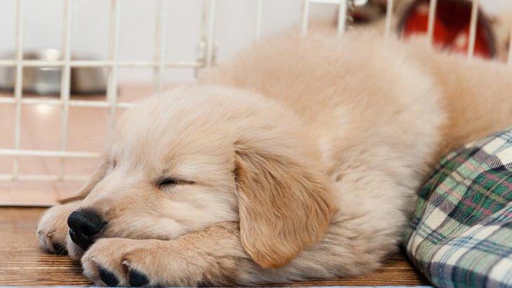 いつ見ても寝てるけど大丈夫?犬の『平均睡眠時間』は何時間?