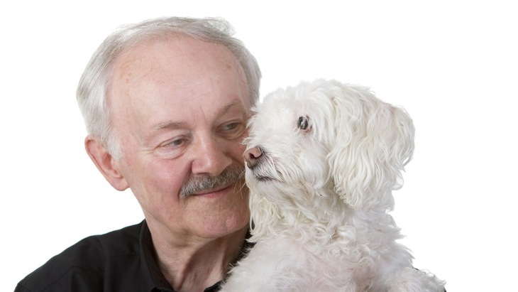犬の年齢は見た目で分かる?子犬・成犬・老犬の容姿に現れる違い