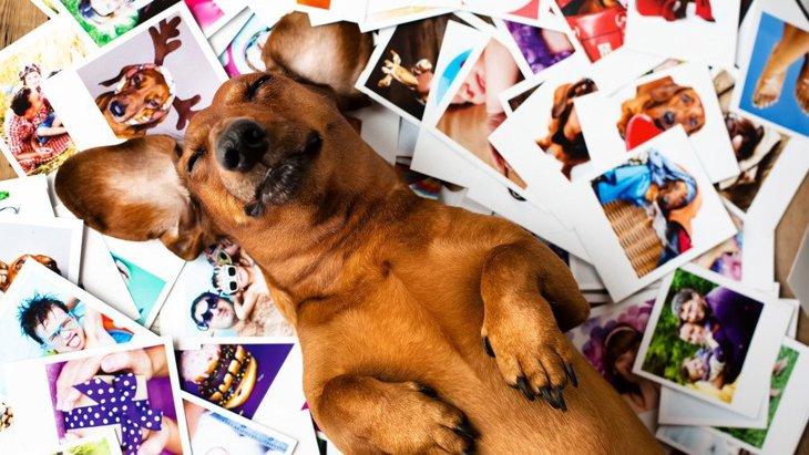 犬は過去のことを覚えているの?人の顔やニオイはどのくらいまで覚えてる?