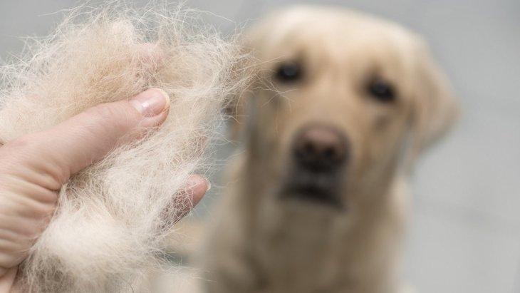 犬に『汚れが蓄積してしまう原因』5選!不潔が及ぼす悪影響とは?