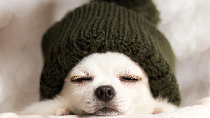 犬にも加湿器は必要?冬の適切な湿度とは